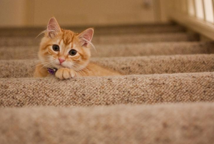 犬や猫などのペットを飼っている人のブログ運営方法について解説